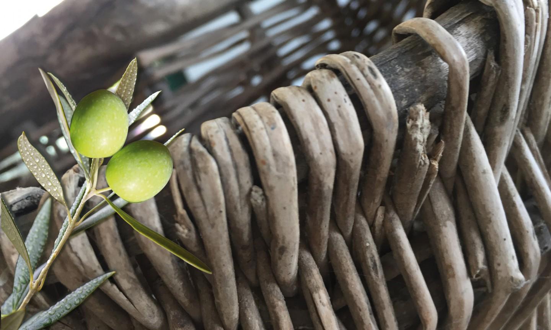 immagine cesto olive